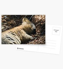 Quokka Dreaming Postcards