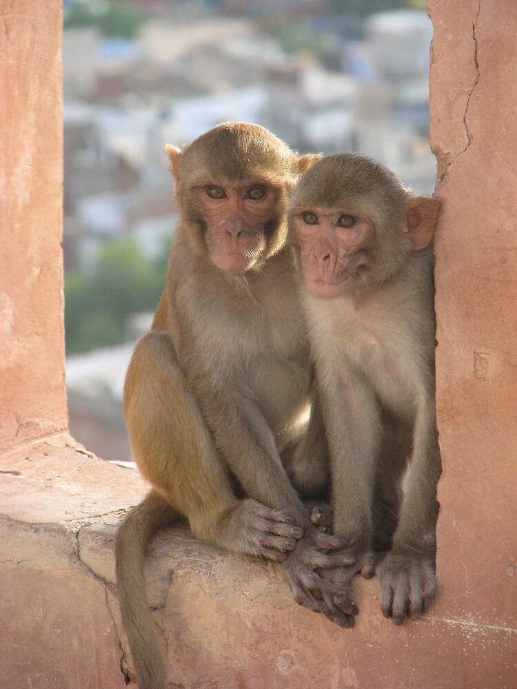Monkey #2  by HelenBanham