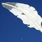 Feather Moon by Emma  Wertheim