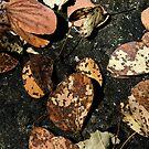 Bush Confetti by Lass With a Camera
