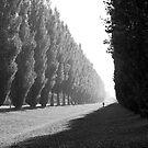 Poplars by VanOostrum