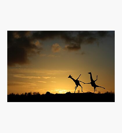 Happy Dancing Giraffes Photographic Print