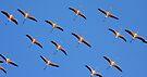 Flamingo Formation by David Clark
