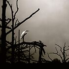egret by soulexperience