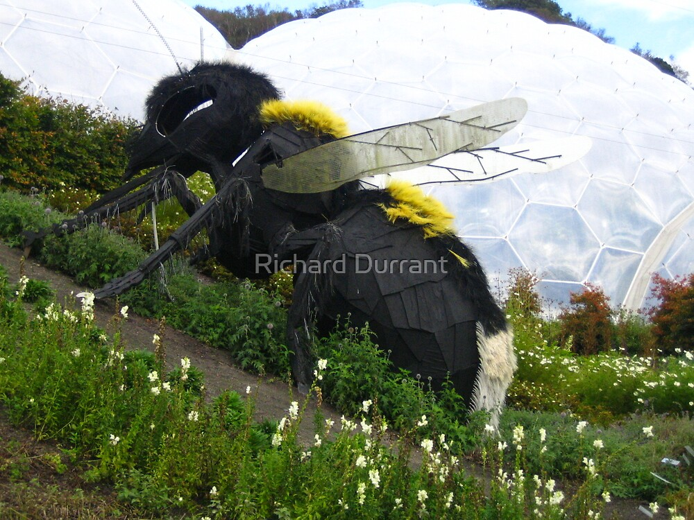 Bombus The Bee by Richard Durrant