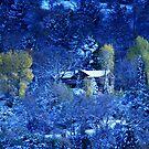 Winter's Beauty by royce