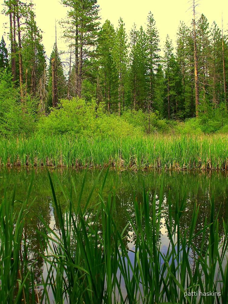 Grace Lake, Shingletown Ca. by patti haskins