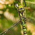 Dragonfly Head Macro by kernuak
