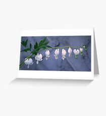 White Bleeding Heart Greeting Card