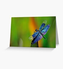 Dragon Fly Insect Dragonfly  Greeting Card