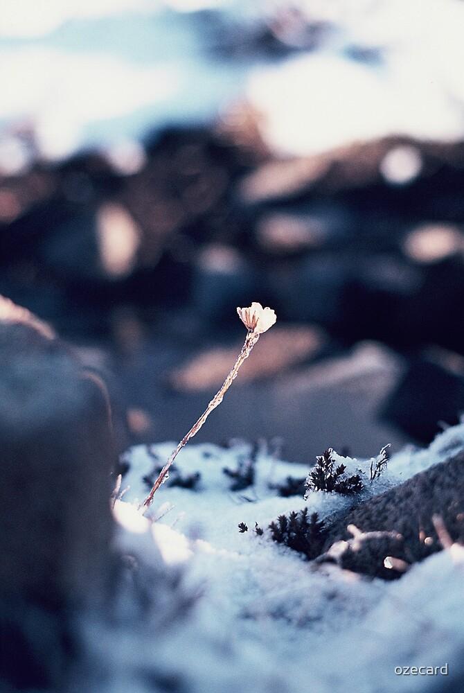 Frozen in Time by ozecard