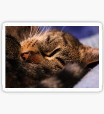 Sleepy kitty Sticker