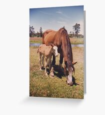 Clydesdale Mare & Filly - Oxley Island  Greeting Card