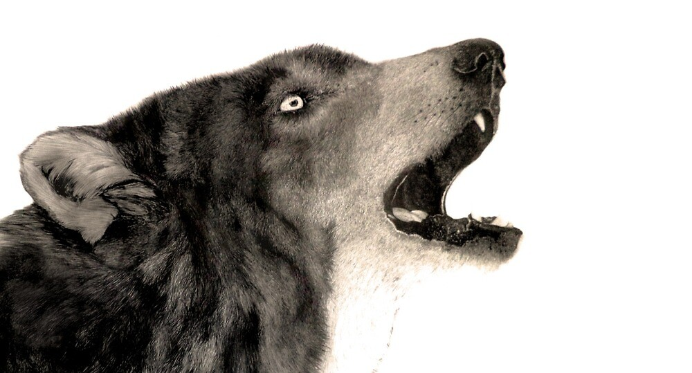 Wolf realism drawing  by Darrel Leigh
