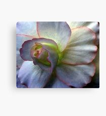Pettifleur  Elite Canvas Print