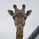the best eyelashes in the animal kingdom by jude walton