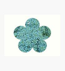 Green Broccoli Florets Art Print