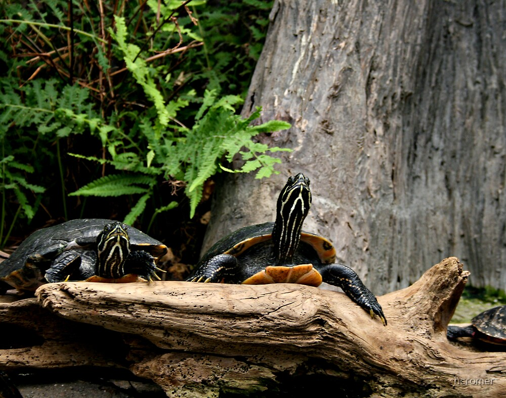 Turtles by hcromer