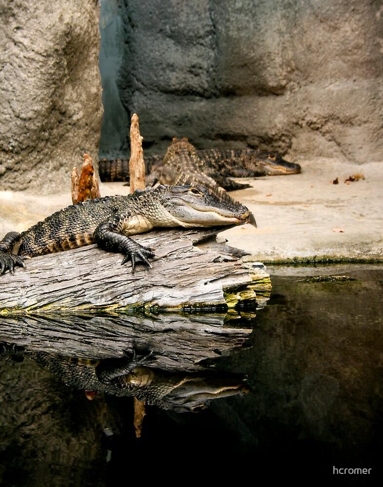 Alligator by hcromer