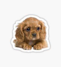 Cute Puppie Sticker