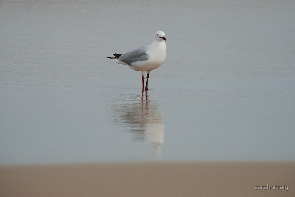 Seagull Reflections by sarahncraig
