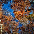 Fall Colors by cclaude