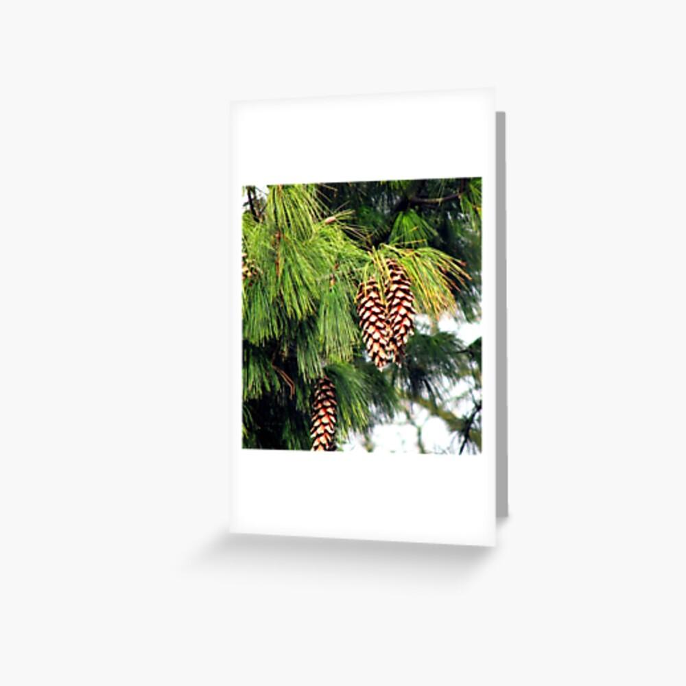 On The Threshold of Winter - Sunlit Pine Cones  Grußkarte