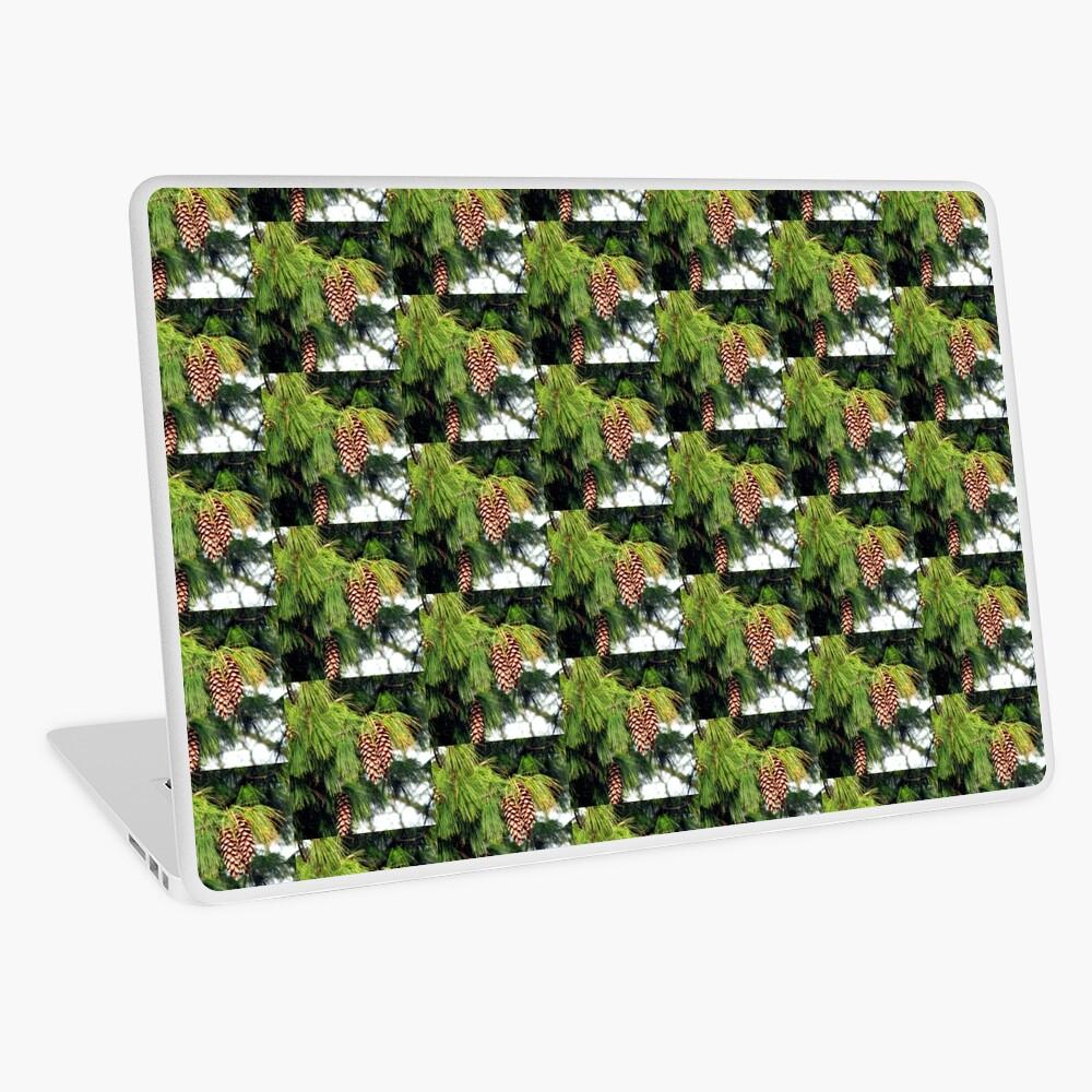 On The Threshold of Winter - Sunlit Pine Cones  Laptop Folie