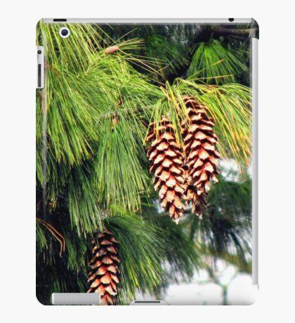 On The Threshold of Winter - Sunlit Pine Cones  iPad-Hülle & Klebefolie