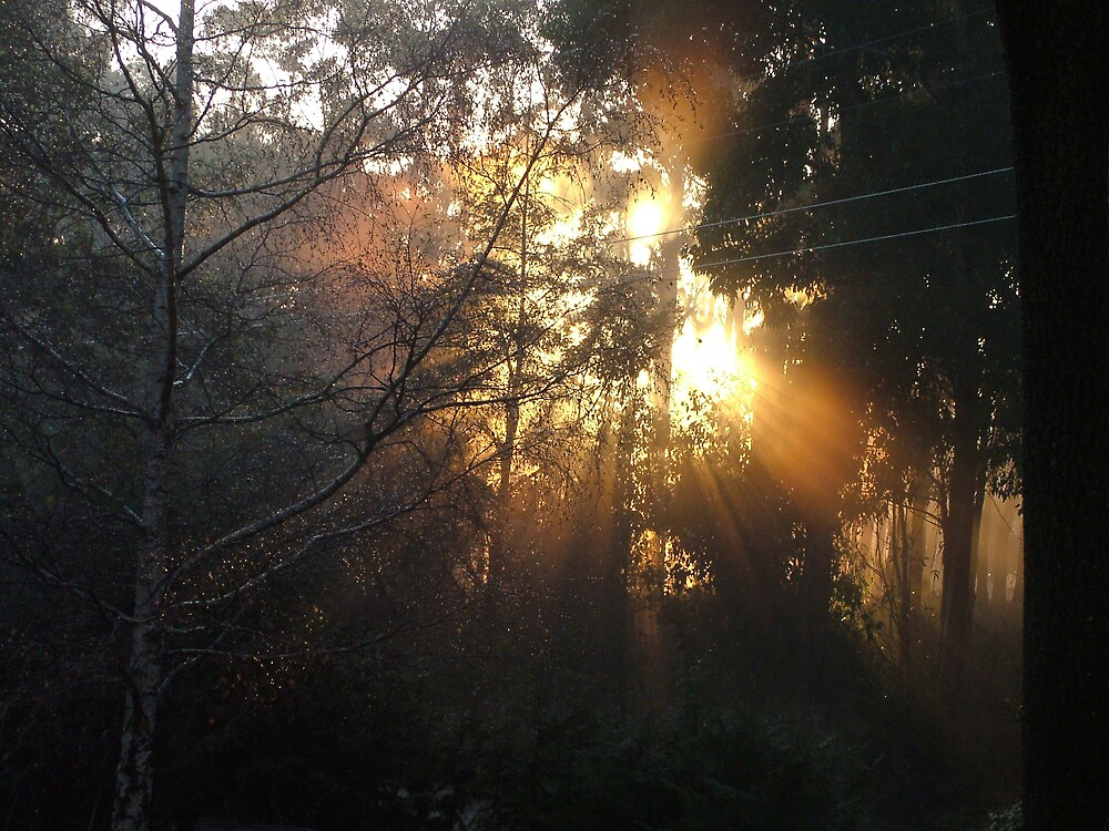 Morning Has Broken by Meryl  Moscrop