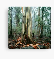 Shining Gum Canvas Print