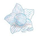 teal turquoise flower with variegated petals by Dawna Morton