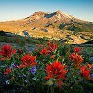 Sunset Paintbrushes at Mount St. Helens by Jason Heritage