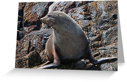 Australian Fur Seal 2 by Werner Padarin