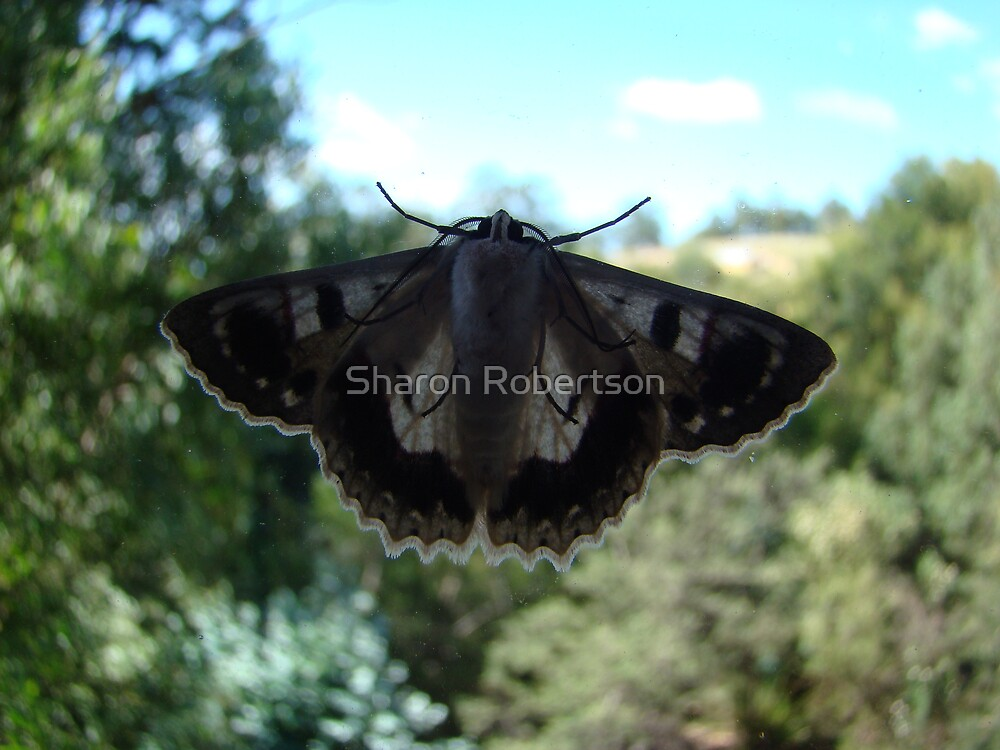 Moth looking in... by Sharon Robertson