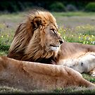 Contented by Chris Coetzee