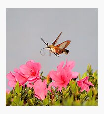 Flying Lobster Photographic Print