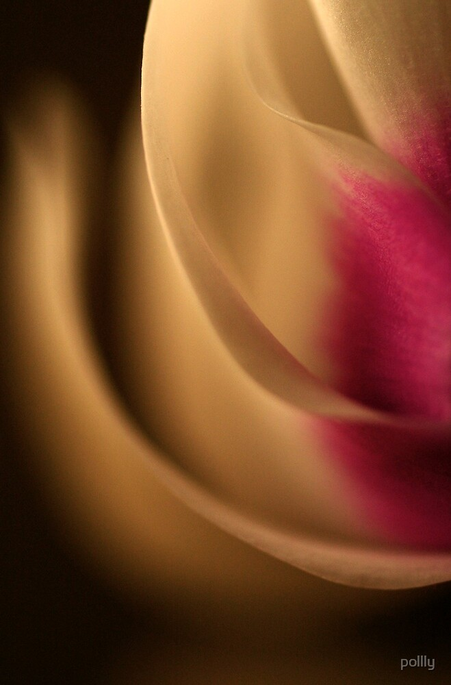 Petals by pollly