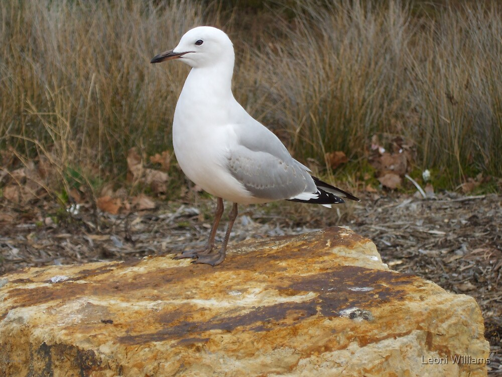 Seagull on Lookout by Leoni Williams