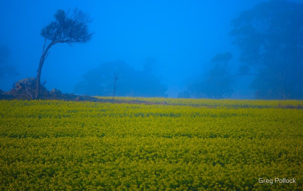 Morning Canola  by Greg Pollock