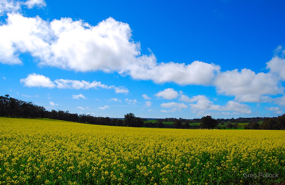 Country Canola by Greg Pollock