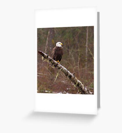 Skagit River Bald Eagle. Greeting Card