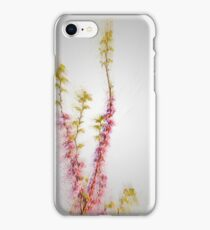 Judas Tree (Cercis siliquastrum). Photographed in the Upper Galilee Israel iPhone Case/Skin
