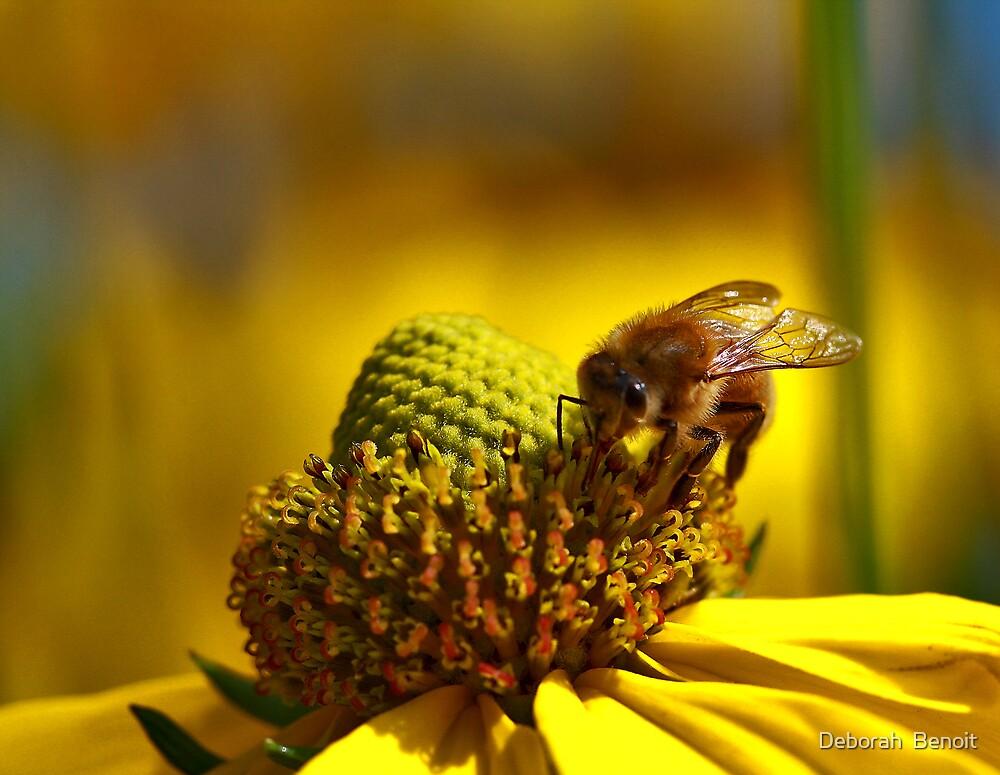 Honey Bee Gold by Deborah  Benoit