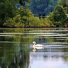 Swan Lake by Cynthia48