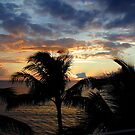 Sunset through the Palms by Cathy Jones