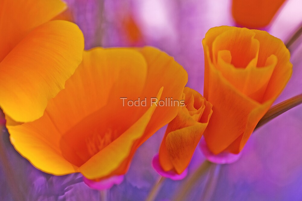 Color My World.  by Todd Rollins