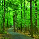 Green Trees - Impressions of Summer Forests by Georgia Mizuleva