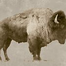 American Bison by Jim Sauchyn