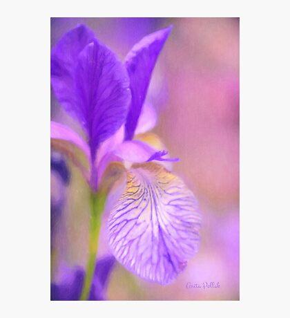 Iris in Pastel Photographic Print